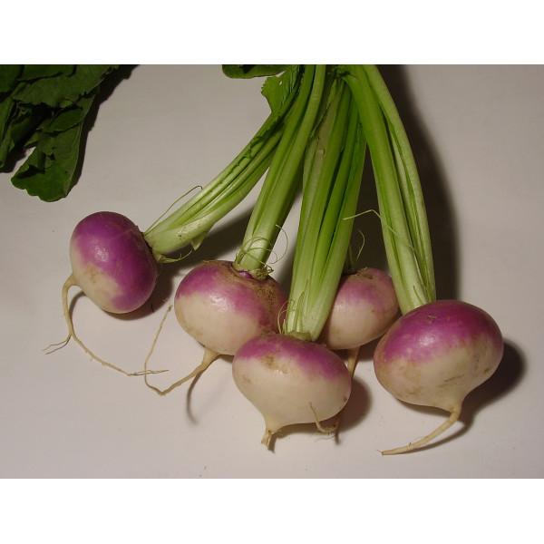 Fresh Turnip $/Lb
