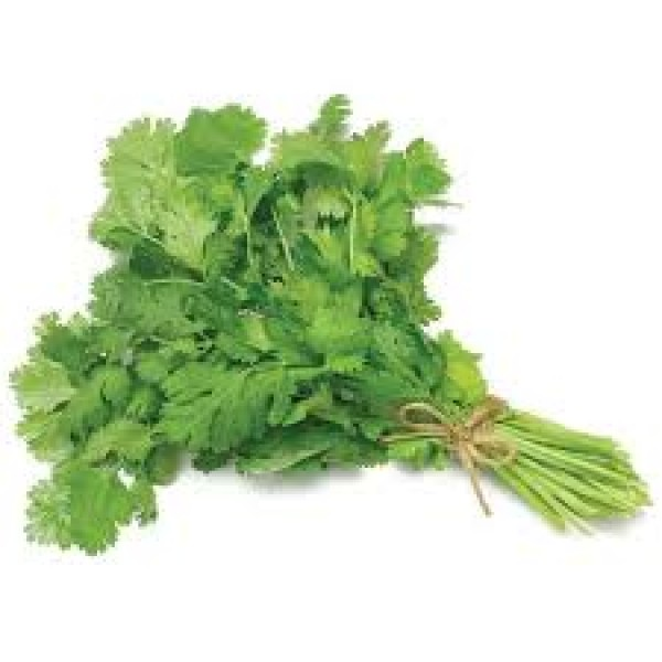 CILANTRO ( DHANA) BUNCH $/EACH