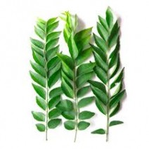 Fresh CURRY LEAVES LARGE PKT
