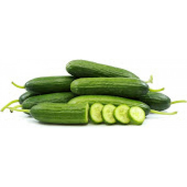 Fresh Indian CUCUMBER $/Lb